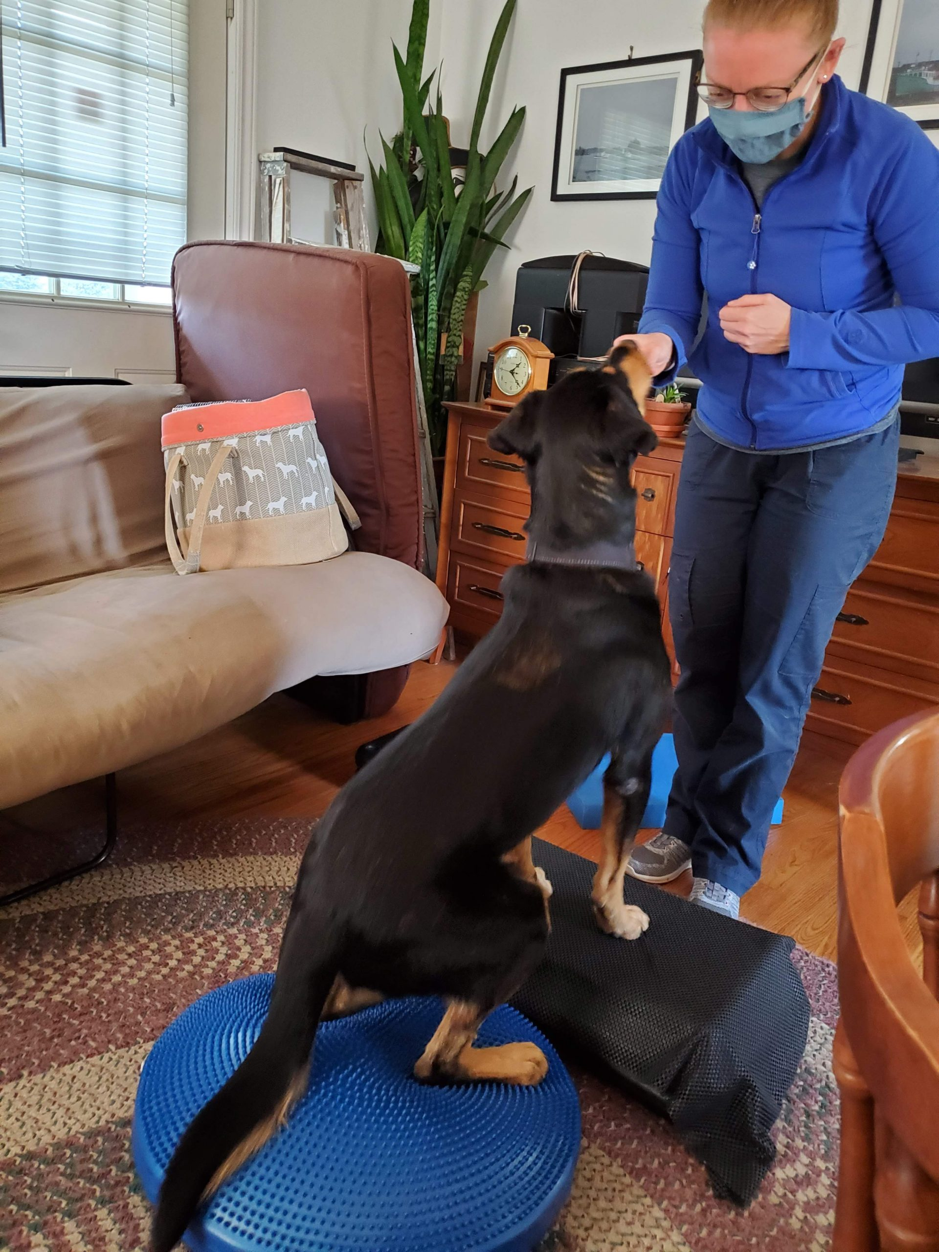 Karma exercising recovering from a CCL tear.