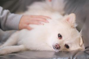 Dog having a massage